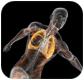 肌氧常用指标及解读
