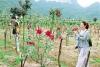 三里镇生态农旅产业现雏形