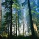 打造原生态木门的步骤