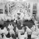 北京开展畜禽环境日常监测确保安全养殖