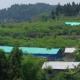 浙江:浙江实施互联网兽药销售清洁工程