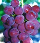 葡萄酒的制作过程