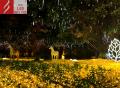 贝玥带你了解最全面的古镇灯光文化节