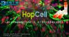 人神经前体细胞NPCs产品全新上市,前十名用户免费赠送试用