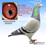 CHN2016-09207雄