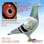 CHN2016-03-0083301雄