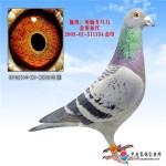 CHN2014-01-309648雄