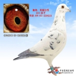 CHN2013-01-561006雄