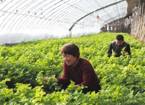 承德围场构筑京津周边重要时差菜供应基地