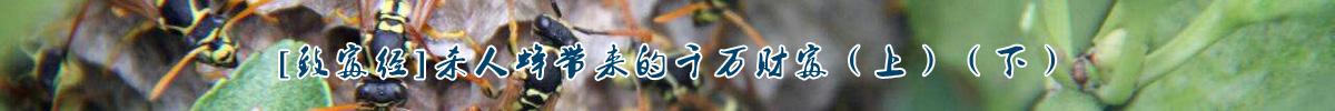 [致富经]杀人蜂带来的千万财富(上)(下)