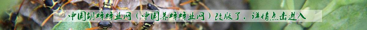 中国养蜂蜂业网-中国胡蜂蜂业网2017年改版公告