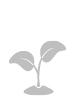 植物液除甲醛