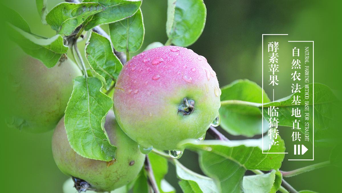 临猗酵素苹果