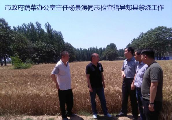 市政府蔬菜办公室主任杨景涛到分包的郏县检查指导禁烧工作