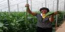 有机蔬菜种植基地