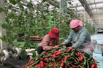 互助县国家级农业科技示范园:以科技力量撬动农业新发展