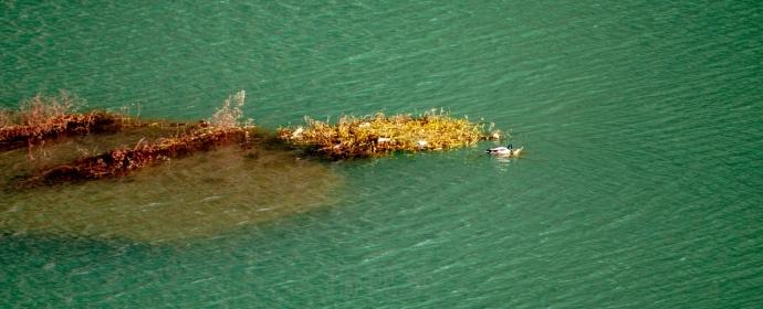 中国北方污染最轻的河流:河边饭店有河鲜,生活废水排到河里边?