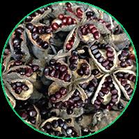 牡丹种子播种技术