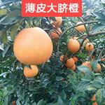 红心 橙子新鲜湘南脐橙 湖南崀山香甜橙子水果现摘拍2件发10斤