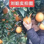 黄心 橙子新鲜湘南脐橙 湖南崀山香甜橙子水果现摘拍2件发10斤