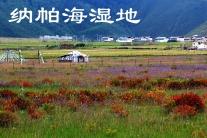 云南迪庆-纳帕海(群编号:53984,Q