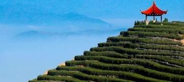 羊岩山茶文化园