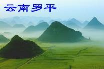 云南曲靖 罗平(市分会群编号:53994