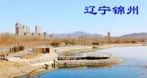 辽宁锦州(分会群编号:21993,QQ群