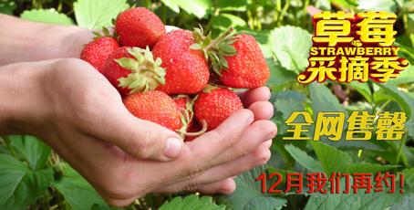 泰安草莓采摘