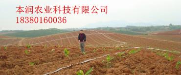 广西金香蕉农场案例
