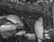 鱼饵的搭配,一般钓友进入钓鱼店......