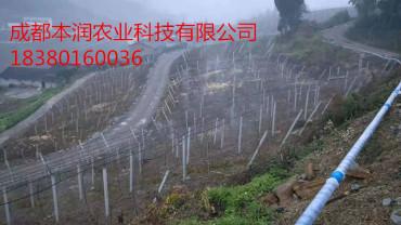 广安邻水猕猴桃吊挂微喷项目