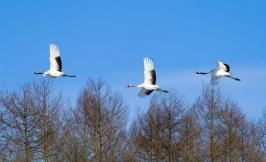 到十大湿地看候鸟齐飞