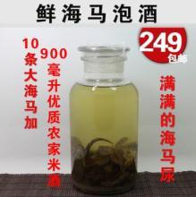 鲜活海马泡酒900毫升 汕尾独有渔民自捕 海马尿才够补