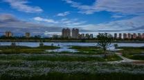 汉江湿地公园掠影2