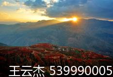 王云杰(539990005)