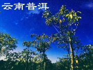 云南普洱(分会群编号:53991,QQ群
