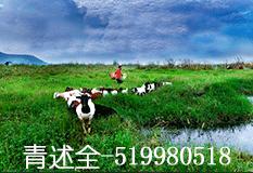 青述全(519980518)