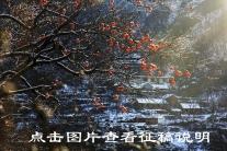 官网省站【作品专栏】征稿说明