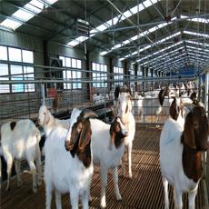 上海畜禽饮水中压紫外消毒器工程
