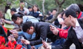 杭州全民狂拍花展