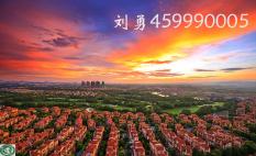 刘勇(459990005)