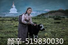 颜辛(519830030)