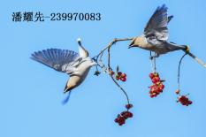 潘耀先(239970083)