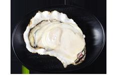 正宗乳山牡蛎