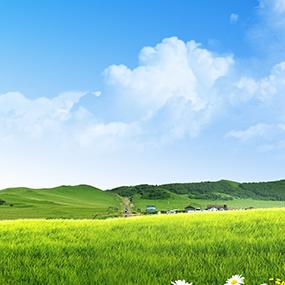 草原/GRASSLAND