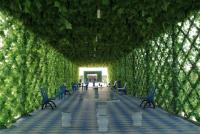 葡萄架長廊