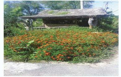 朝鲜族仓房