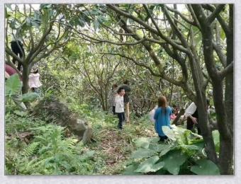 九江绿园种养殖基地风采6