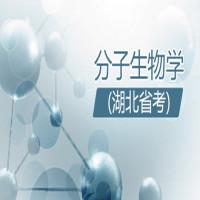 分子生物学(湖北省考)串讲班